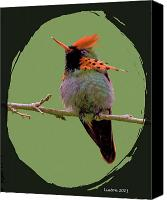 Tropical Bird Art Canvas Prints - Tufted Coquette Hummingbird Canvas Print by Larry Linton