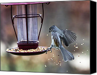 Bird On Feeder Canvas Prints - Tufted Seed Splash Canvas Print by Bill Tiepelman