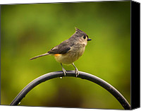 Bird On Feeder Canvas Prints - Tufted Titmouse on Pole Canvas Print by Bill Tiepelman