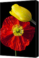 Fragile Canvas Prints - Tulip and Iceland Poppy Canvas Print by Garry Gay