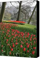 Parcs Canvas Prints - Tulip Carpet  Canvas Print by Valia Bradshaw