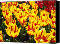 Tulips Canvas Prints - Tulip Flowers Festival Yellow Red art prints Tulips Canvas Print by Baslee Troutman Fine Art Prints