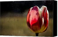 Spring Florals Canvas Prints - Tulip in front Canvas Print by Michel Soucy