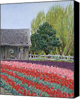 Farming Pastels Canvas Prints - Tulip Season Canvas Print by Marie-Claire Dole