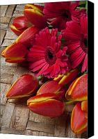 Horticulture Canvas Prints - Tulips and red daisies  Canvas Print by Garry Gay