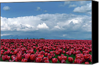 Vernon Canvas Prints - Tulips Festival Canvas Print by Taken by Simon Yu