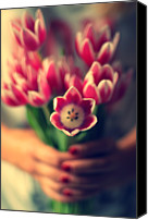 Rotterdam Canvas Prints - Tulips In Woman Hands Canvas Print by Photo by Ira Heuvelman-Dobrolyubova