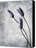 Mothers Day Canvas Prints - Tulips Canvas Print by Photodream Art