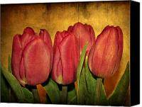 Textures Canvas Prints - Tulips standing Canvas Print by Cathie Tyler