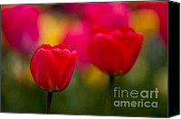 Pink Tulips Canvas Prints - Tulips Canvas Print by Thomas Splietker