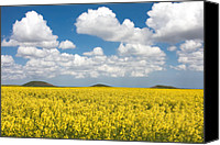 Rapeseed Canvas Prints - Tumuli Canvas Print by Gabriela Insuratelu