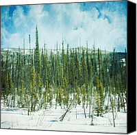 Old Trees Canvas Prints - Tundra Forest Canvas Print by Priska Wettstein