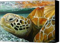 Jon Ferrentino Canvas Prints - Turtle Me Too Canvas Print by Jon Ferrentino