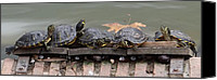 Retiro Canvas Prints - Turtles in Spain Canvas Print by Keith Stokes