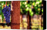 Blue Grapes Canvas Prints - Tuscan Beauty Canvas Print by Mars Lasar