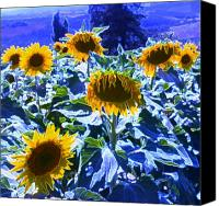 Floral Canvas Prints - Tuscany Sunflowers Canvas Print by Giancarlo  Cungi