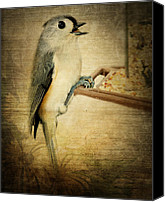 Bird On Feeder Canvas Prints - Tweet Tweet Canvas Print by Kathy Jennings