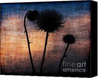 Flowers Pyrography Canvas Prints - Twilight thistle Canvas Print by Tammy Espino