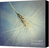 Still Life Canvas Prints - Twirling Canvas Print by Priska Wettstein