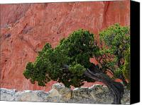 Red Rock Formations Canvas Prints - Twisted Juniper - Garden of the Gods Canvas Print by The Forests Edge Photography - Diane Sandoval