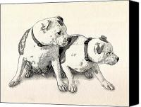 Terrier Canvas Prints - Two Bull Terriers Canvas Print by Michael Tompsett