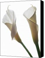 Calla Lily Canvas Prints - Two Calla Lilies Canvas Print by Terence Davis