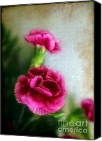 Judi Bagwell Canvas Prints - Two Carnations Canvas Print by Judi Bagwell