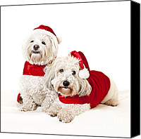 Santa Claus Canvas Prints - Two cute dogs in santa outfits Canvas Print by Elena Elisseeva