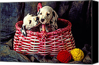 Hound Canvas Prints - Two Dalmatian Puppies Canvas Print by Garry Gay