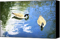 Geese Canvas Prints - Two Geese Canvas Print by Scott Norris