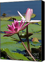 Florida Flowers Canvas Prints - Two Graceful Water Lilies Canvas Print by Sabrina L Ryan