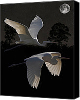 Hera Mixed Media Canvas Prints - Two Great Egrets In Flight Canvas Print by Eric Kempson