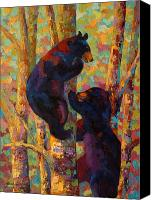 Alaska Canvas Prints - Two High - Black Bear Cubs Canvas Print by Marion Rose