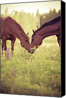 No Face Canvas Prints - Two Horses In Field Canvas Print by Stefan Sager