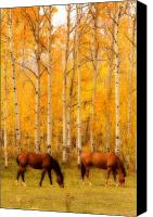 "\""striking Photography\\\"" Canvas Prints - Two Horses in the Autumn Colors Canvas Print by James Bo Insogna"