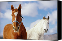 Bridle Canvas Prints - Two Horses Canvas Print by Noah Clayton