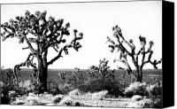 Joshua Trees Canvas Prints - Two Joshua Trees Canvas Print by John Rizzuto