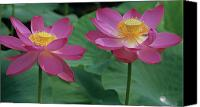 Lotus Leaves Canvas Prints - Two Lotus Canvas Print by Elvira Butler