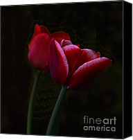 Two Red Tulips Canvas Prints - Two Red Tulips Canvas Print by Mitch Shindelbower