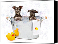 Copy Space Canvas Prints - Two Scruffy Puppies in a Tub Canvas Print by Susan  Schmitz