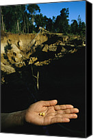 Gold Metal Canvas Prints - Two Small Pellets Of Gold In A Hand Canvas Print by Steve Winter