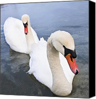 Blue Swan Canvas Prints - Two Swans Canvas Print by Svetlana Sewell