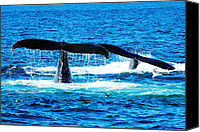 Whale Canvas Prints - Two whale tails Canvas Print by Mingqi Ge