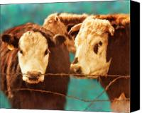 Cow Mixed Media Canvas Prints - Twos Company Threes A Crowd Canvas Print by Colleen Taylor