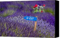 Farm Scenes Canvas Prints - U-CUT Lavender Canvas Print by Eggers   Photography