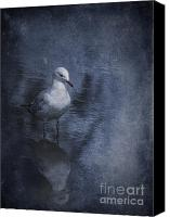 Seagull Photo Canvas Prints - Ubiquitous Canvas Print by Jan Pudney
