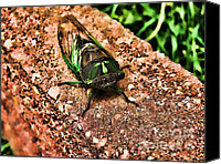 Cicada Canvas Prints - Ugh a Bug Canvas Print by Colleen Kammerer