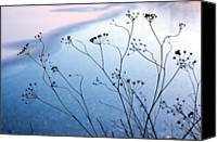 Frozen Canvas Prints - Umbelliferae Silhouettes In Front Of Frozen Lake Canvas Print by Photo Marylise Doctrinal