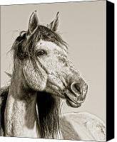 Wild Horse Canvas Prints - Unbroken Canvas Print by Ron  McGinnis