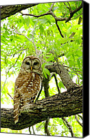 Barred Owl Canvas Prints - Under The Canopy Canvas Print by Robert Frederick